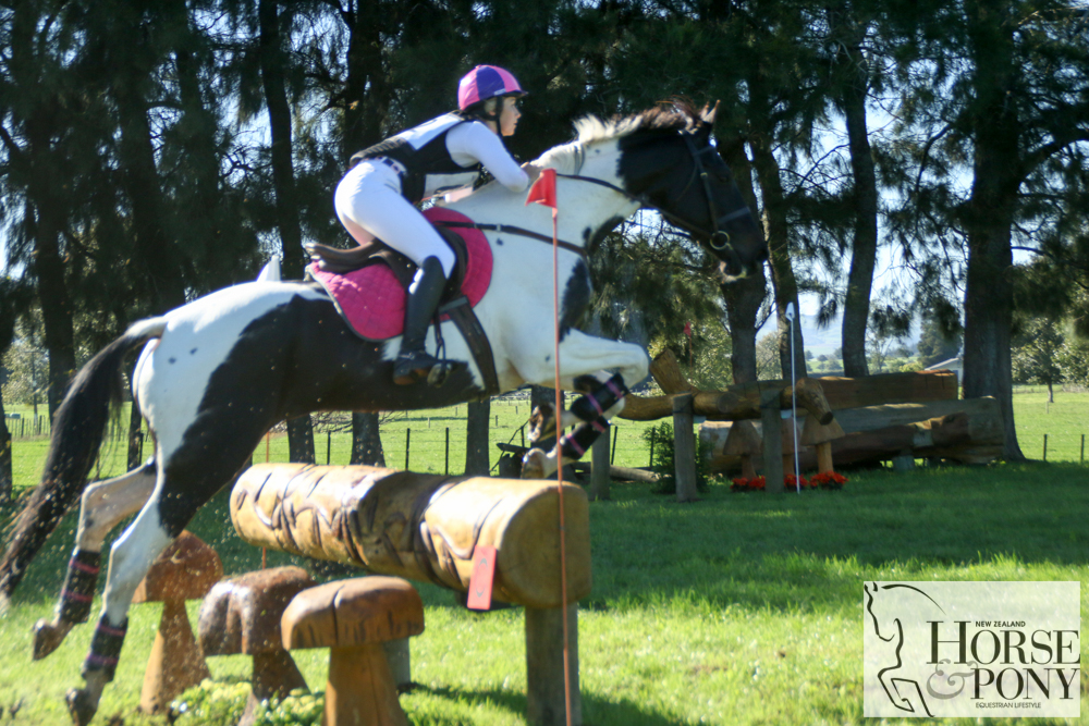Paxton Condor Your Royal Highness Nz Horse Amp Pony